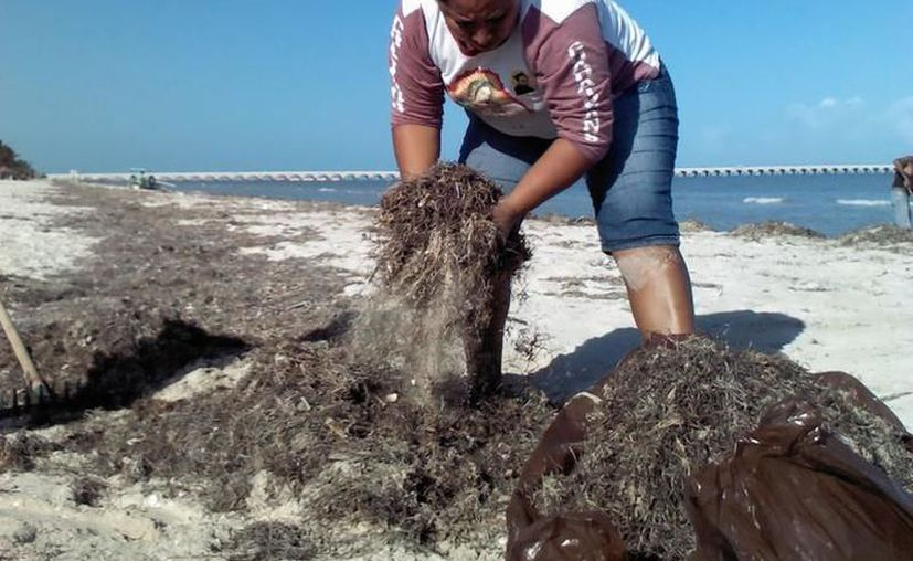 Obras de limpieza en el malecón de Progreso.(Foto: Novedades Yucatán)