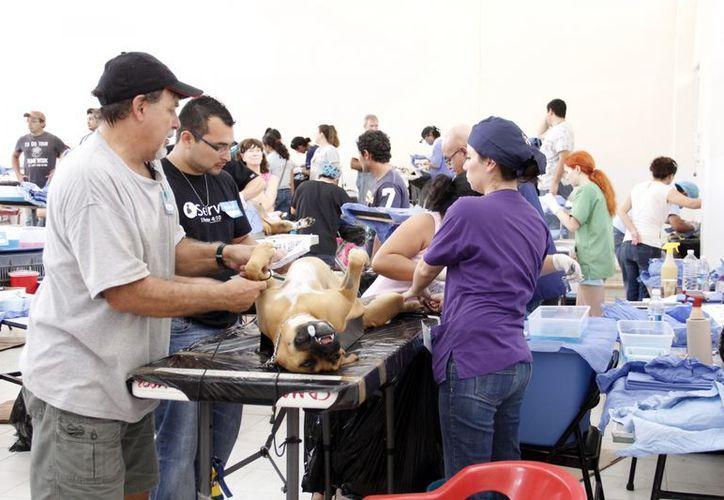 Las operaciones se realizaron en la colonia Emiliano Zapata Sur. (Juan Albornoz/SIPSE)