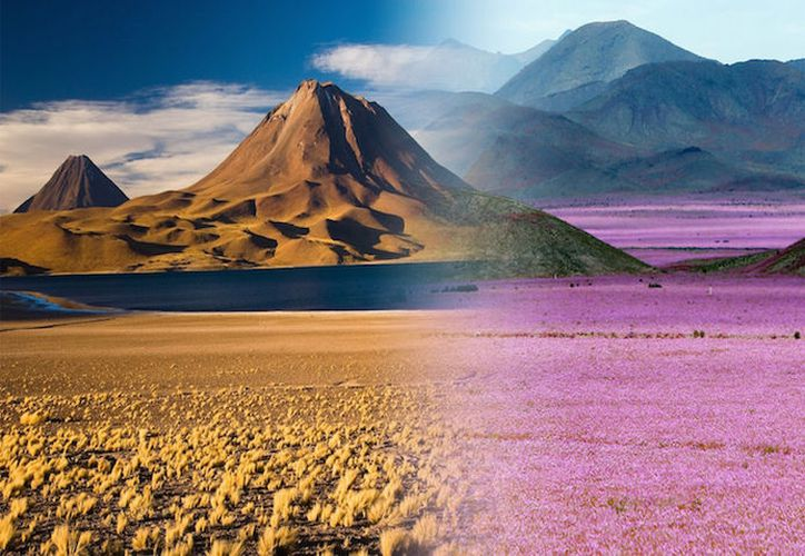 Los chilenos lo llaman desierto florido a un fenómeno que se produce en años en que tiene lugar un inusual aumento de las precipitaciones. (Muy Interesante).