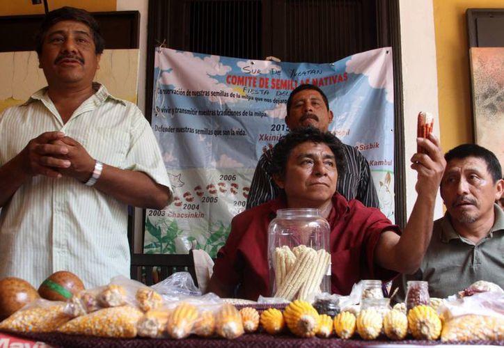 Los indígenas tienen derecho a elegir qué hacer con sus semillas. (Milenio Novedades)