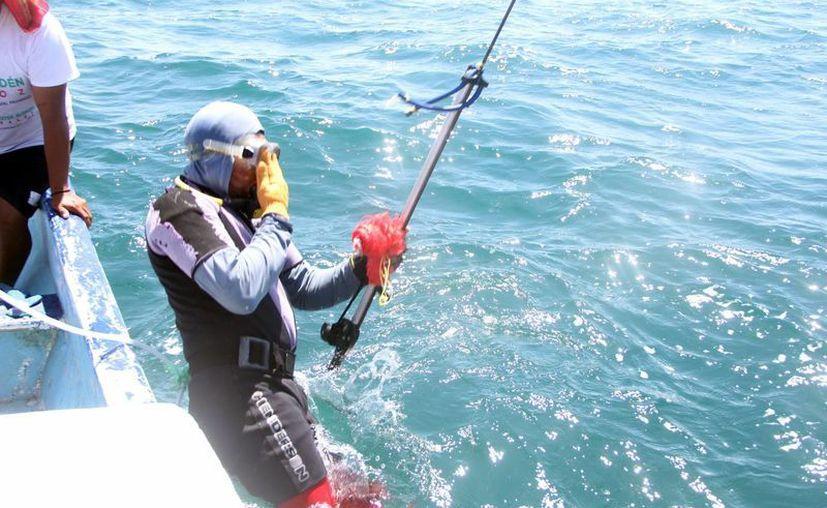 El síndrome de descompresión es un problema que afecta a los pescadores-buceadores yucatecos. (Milenio Novedades)