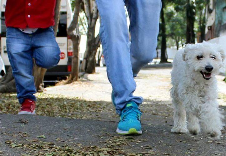 Cada vez es más común ver a visitantes que llegan a Yucatán acompañados de mascotas, principalmente perros. La imagen es únicamente ilustrativa. (NTX/Archivo)