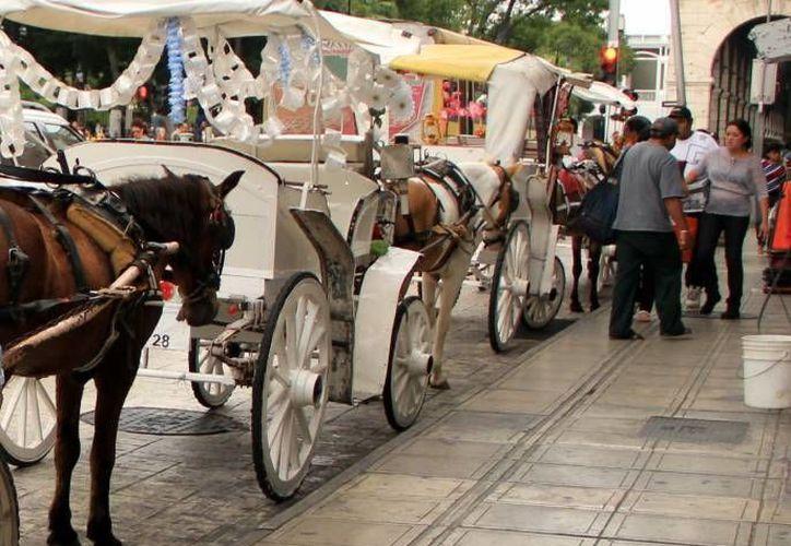 Se carece de un sitio en el centro donde los caballos puedan hidratarse o comer. Imagen de una calesa en el centro de Mérida. (Foto de contexto: Milenio Novedades)