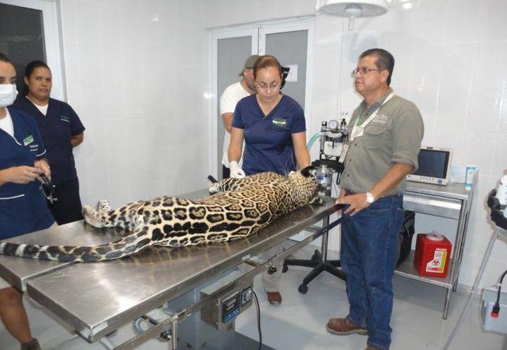 Se le practicaron exámenes físicos completos, así como pruebas diagnósticas. (Redacción)