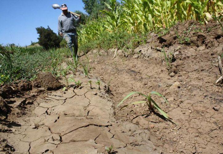 En mayo se dio a conocer que abril fue el mes más seco en Quintana Roo en 20 años. (Redacción/SIPSE)