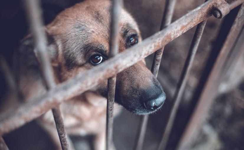 Los casos de crueldad animal en Yucatán han ido en aumento. (Foto de contexto)
