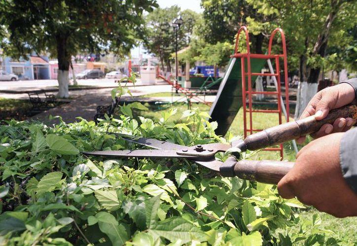Podan árboles en las principales áreas de recreación y avenidas. (Cortesía/SIPSE)