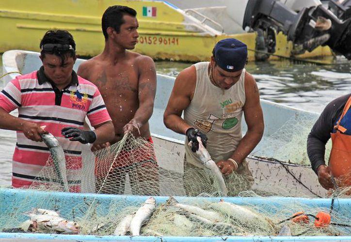 La Sagarpa anuncia fecha del posible inicio de la veda de captura de camarón que finalizaría en octubre. (Jesús Tijerina/SIPSE)