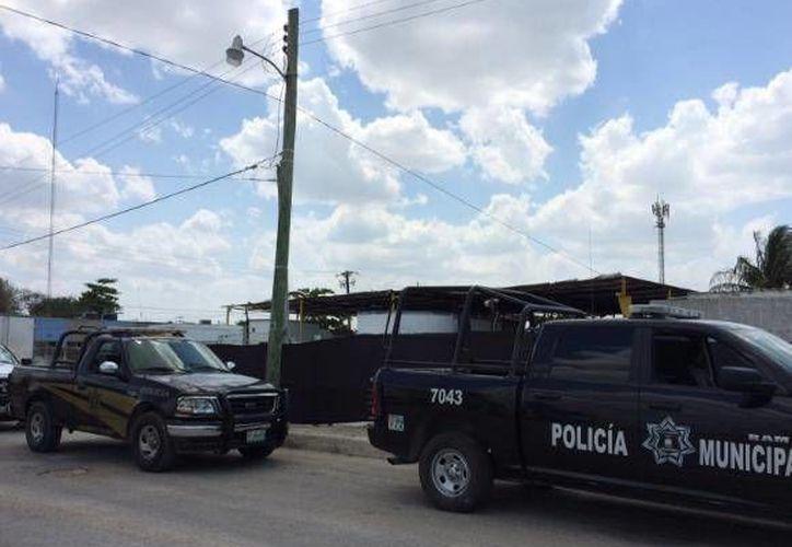 Patrullas de la Policía estatal y municipal se trasladaron a unos terrenos de Progreso donde se secaba gran cantidad de pepino de mar. (SIPSE)
