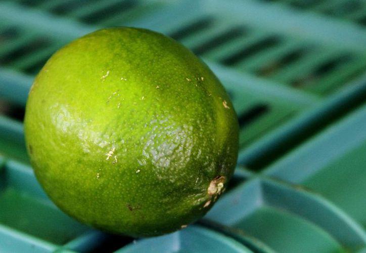 La Profeco presentó una denuncia contra quien resulte responsable por el alza injustificada al precio del limón, que dijo 'atenta contra la economía nacional'. (Archivo/Notimex)