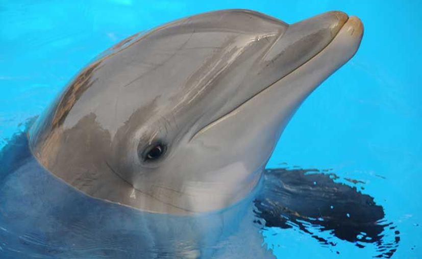 """Los delfines, resaltó, solo ayudan a localizar las vaquitas, por lo que """"no es una función como de perro pastor'. (Contexto)"""