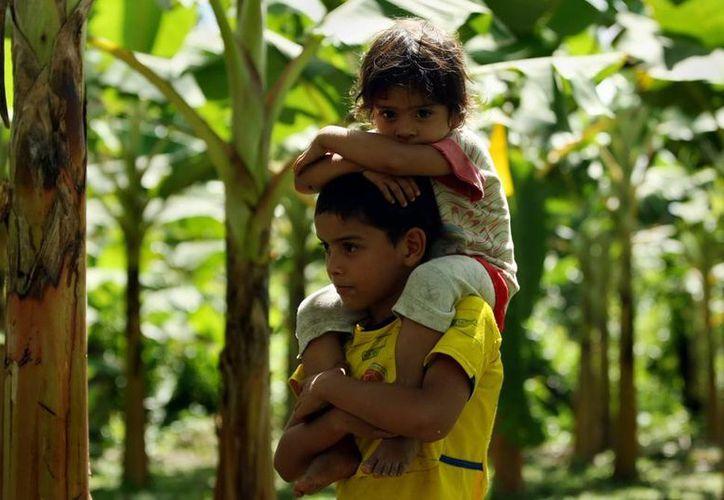 Imagen de dos niños de una familia guardabosques cultivadora de plátano a pocos kilómetros de San José del Guaviare al sur de Colombia. (Efe)