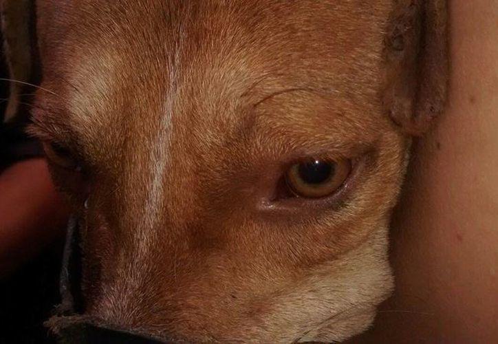 El perro fue rescatado por protectores de animales, quienes le dieron atención veterinaria. (Cortesía)