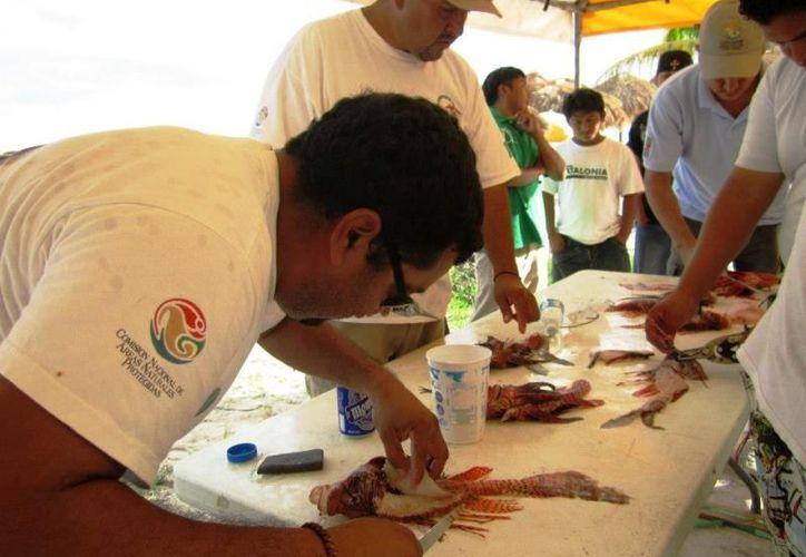 En la última jornada de pesca de este pez, efectuada el pasado fin de semana, se erradicaron aproximadamente 200 ejemplares. (Juan Palma/SIPSE)