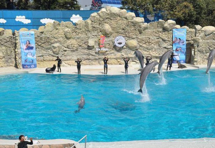 El Grupo Dolphin Discovery adquirió cuatro nuevos parques en Jamaica. (Contexto/Internet)