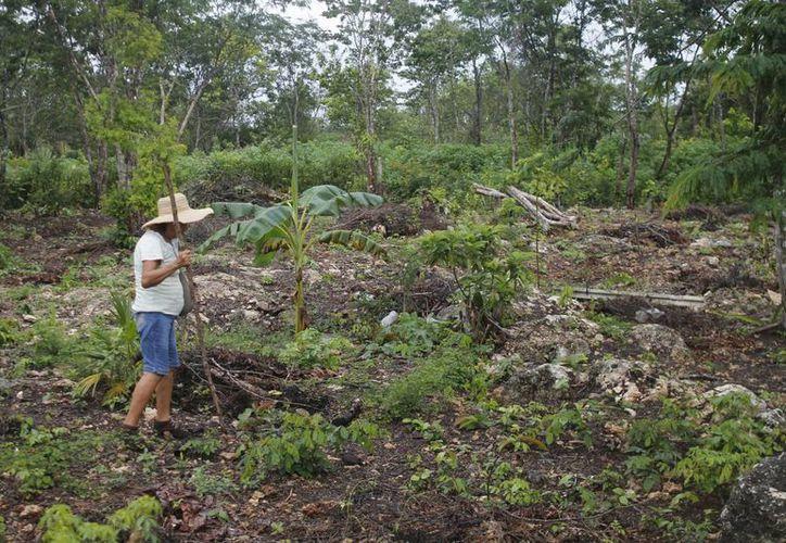 Su terreno se encuentra en Leona Vicario, al pie de la carretera, rumbo a Mérida. (Israel Leal/SIPSE)