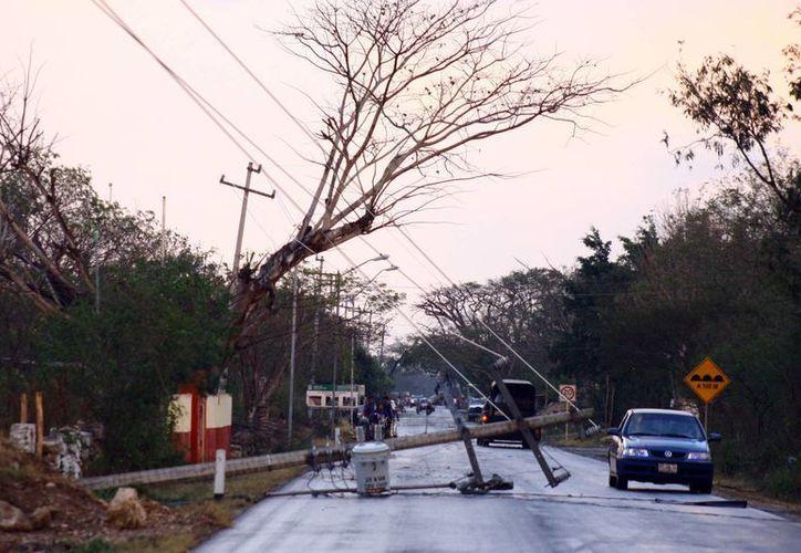 En algunas zonas, el viento tiró postes y árboles. (Jorge Pallota/SIPSE)