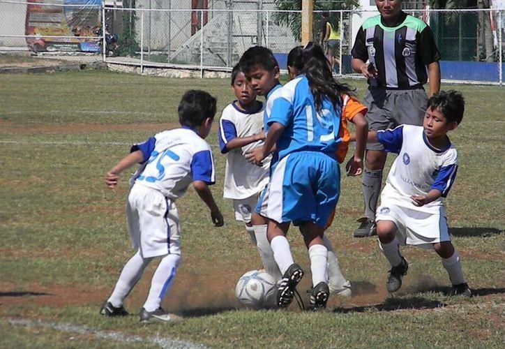 Mientras las categorías infantiles sostendrán actividad de Liga, en las juveniles continúan la liguilla del torneo de Copa. (Ángel Mazariego/SIPSE)