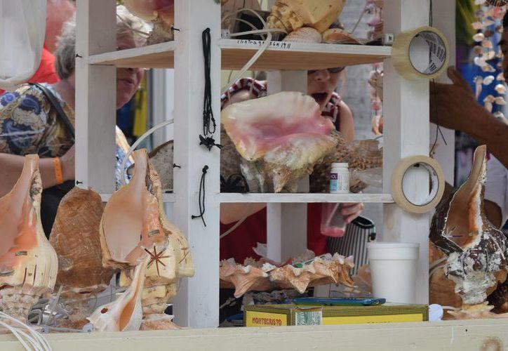 La venta de conchas de caracol y estrellas de mar está prohibida, pero se sigue realizando en Cozumel. (Gustavo Villegas/SIPSE)