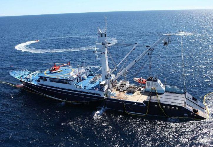 Se pretende formar alianzas estratégicas con los sectores público y privado para promover mejores prácticas en el mar. (Foto: Conapesca)