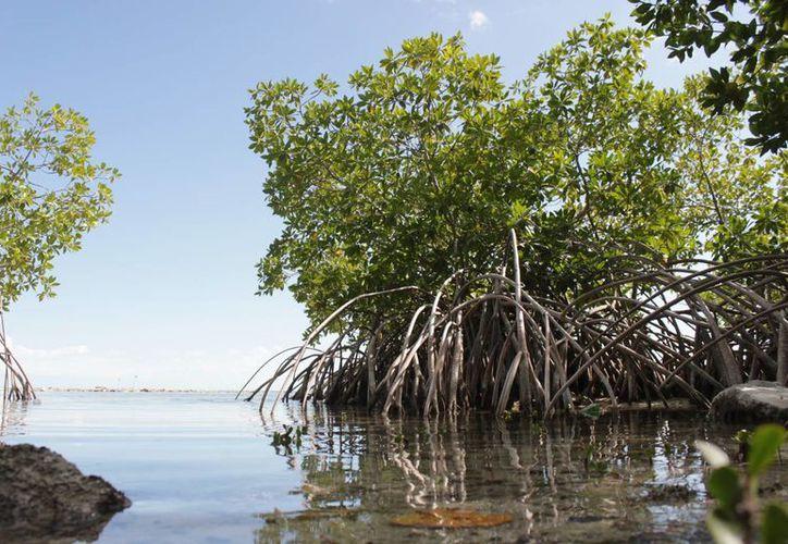 El proyecto consistió en eliminar los obstáculos naturales, como ramas y árboles caídos. (Gerardo Amaro/SIPSE)