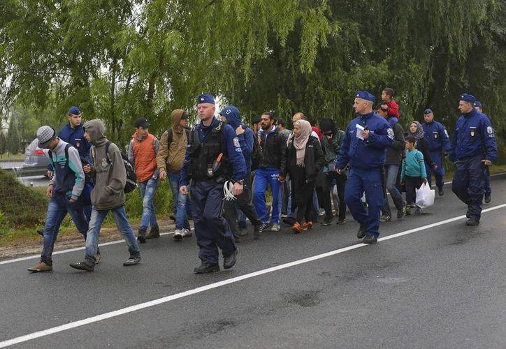 Refugiados son escoltados por la policía al punto de registro en Roszke en la frontera Serbia con Hungría. (EFE)
