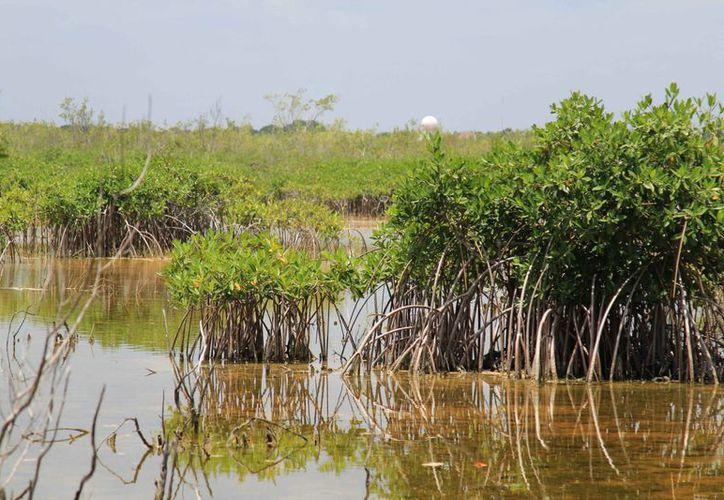 La COP 13 se celebrará en diciembre próximo en Cancún. (Jesús Tijerina/SIPSE)