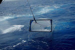 Chetumaleños realizan expedición oceanográfica