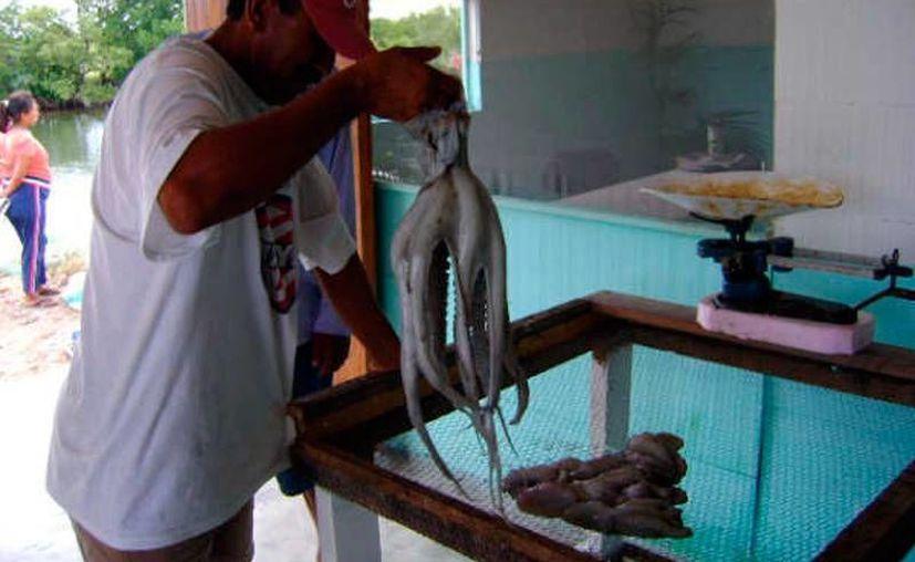El precio del pulpo, que en 3 meses pasó de 40 a 90 pesos, en promedio por kilo, motivó a más pescadores a hacerse a la mar. La imagen es únicamente ilustrativa. (Milenio Novedades)