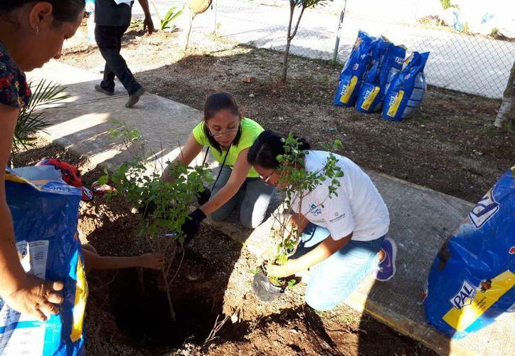 La Asociación Mexicana de Arboricultura organiza los trabajos. (Octavio Martínez/SIPSE)