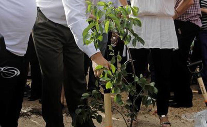 Siembra del primer árbol en el parque Soblonké del fraccionamiento Gran Santa Fe. (Milenio Novedades)