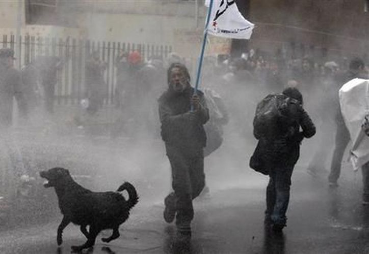 Los perros son bañados con una manguera de agua a presión, (Agencias)