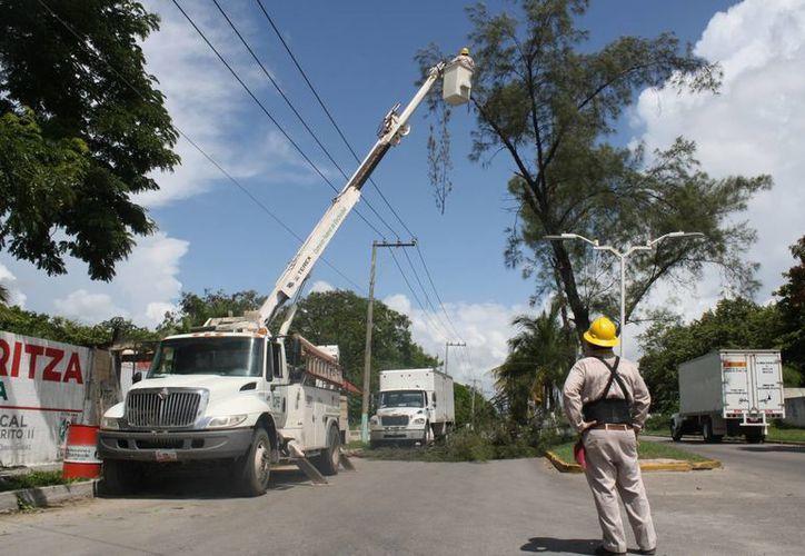 Los trabajos de poda de árboles los realizan empleados de la CFE con equipo especializado. (Juan Palma/SIPSE)