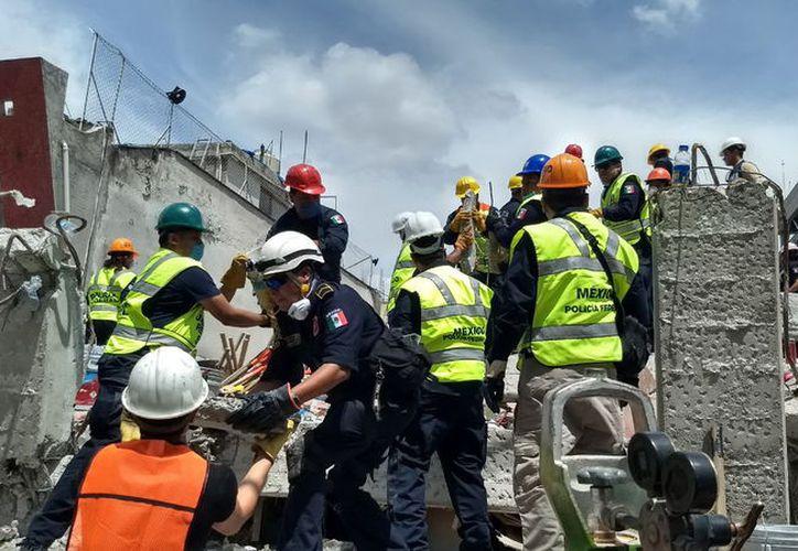 Los rescatistas yucatecos estuvieron al pie del cañón en las labores dentro de los edificios colapsados. (Milenio Novedades)
