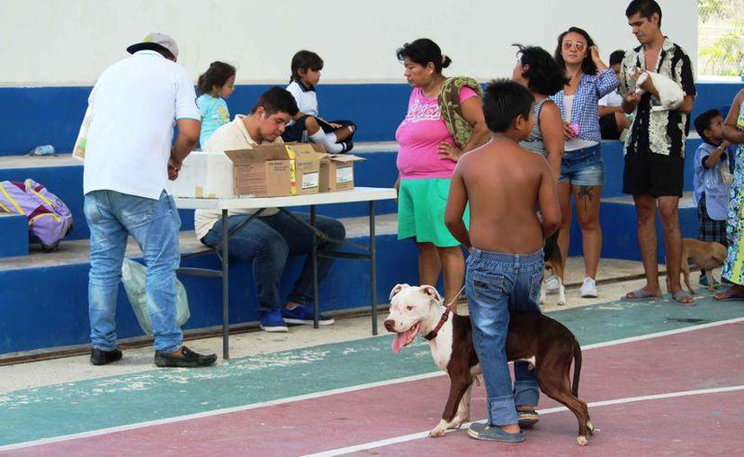 La campaña se llevó a cabo en las colonias de la ciudad. (Octavio Martínez/SIPSE)