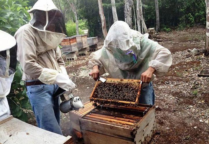 Productores de miel de Bacalar enviaron el último de ocho contenedores que contenían las toneladas del producto. (Javier Ortíz/SIPSE)