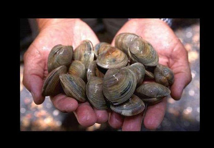 Los investigadores afirmaron que el cáncer que se propaga entre los moluscos no afecta a los humanos. (jotdown.es)