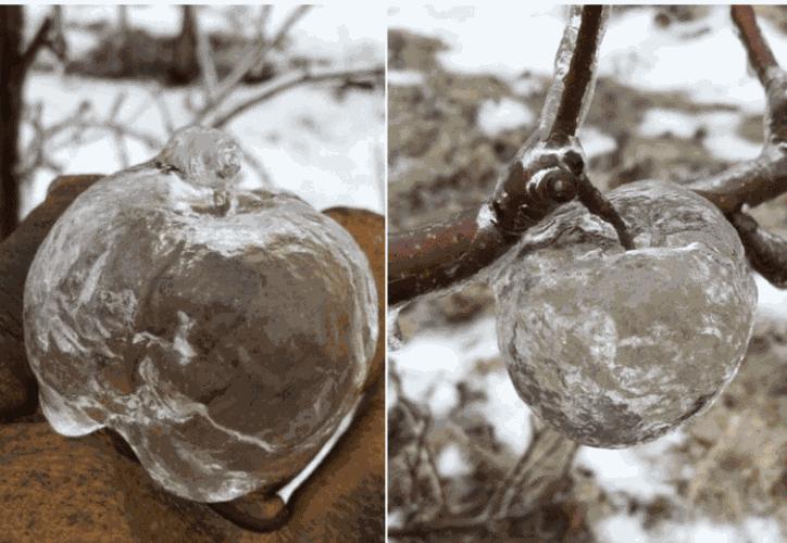 Es importante mencionar que las figuras congeladas de manzanas permanecen; aunque no exista ya la fruta en su interior. (El Debate)