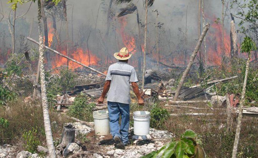 El territorio de bosques y selvas en México es afectado por incendios forestales, por lo que se han mapeado las entidades con más incidencias. (Tomás Álvarez/SIPSE)