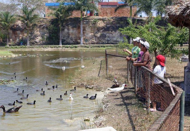 Niños alimentan a los patos en el Acuaparque. (Milenio Novedades)