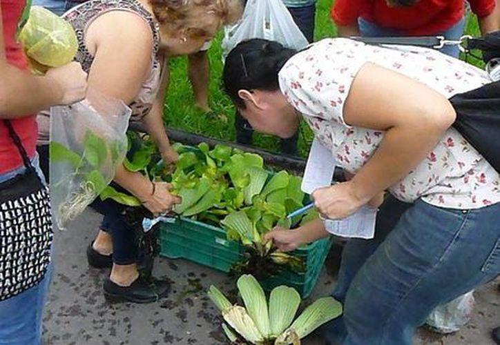 Aficionados a la jardinería intercambian o donan plantas en los eventos organizados por el grupo de Facebook Regalo y Trueque Verde. (Milenio Novedades)