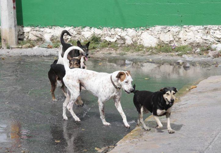 Automedicar a las mascotas implica poner en riesgo su vida. (Tomás Álvarez/SIPSE)