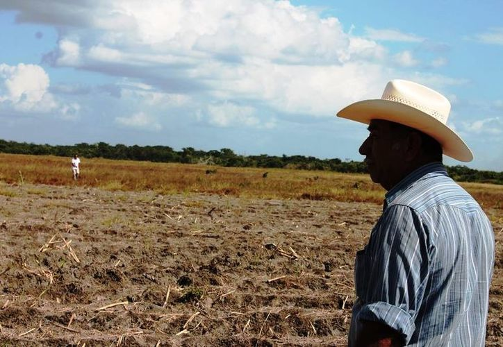 El endeudamiento al ingenio de San Rafael de Pucté podría generar que en la próxima zafra se registre una significativa reducción. (Edgardo Rodríguez/SIPSE)