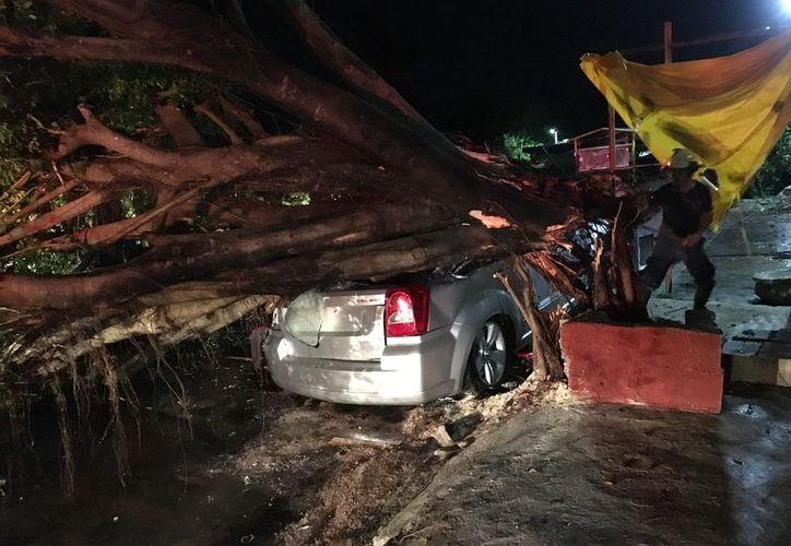 Bomberos tardaron horas en podar las ramas del árbol para liberar al auto. (Foto: Redacción/SIPSE)