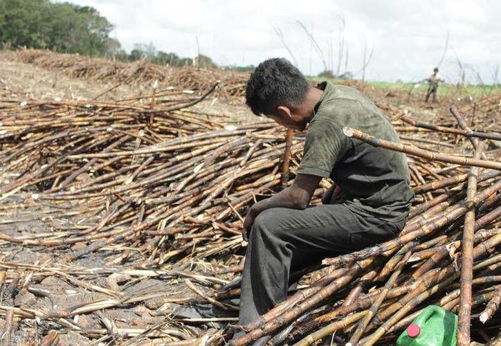 El seguro cubre a más de dos mil 500 cortadores de caña que cada año llegan a residir a la zona. (Edgardo Rodríguez/SIPSE)