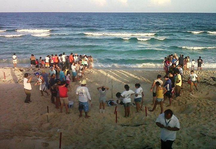 La liberación de las crías de tortugas será en la costa oriental. (Cortesía/SIPSE)