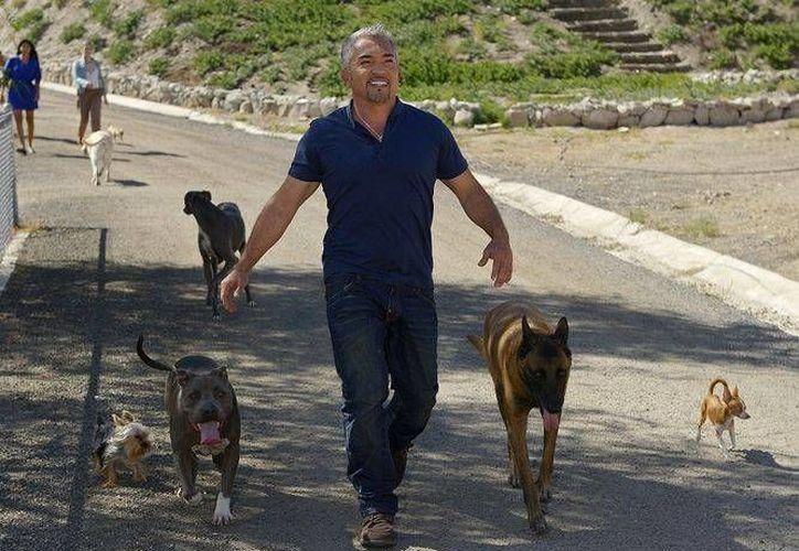 En la foto, Cesar Millán camina junto a sus mascotas. (AP)