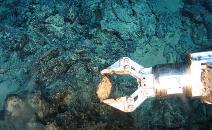 La exploración profunda submarina para sacar provecho a los minerales todavía está sujeta a debate. (mineriaenlinea.com)