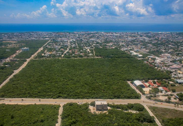 Abren licitación para diseñar estación del Tren Maya en Playa del Carmen - Sipse.com