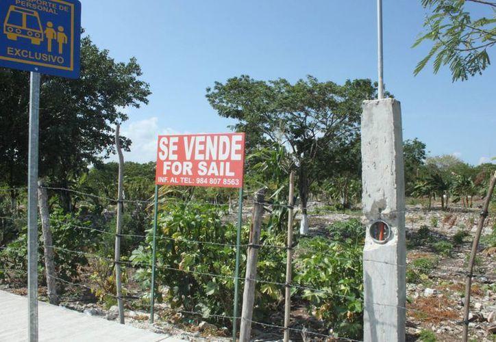 Los invasores de este predio advierten a sus compradores que es una zona invadida y que es un espacio nacional, sin embargo es propiedad privada.  (Carlos Calzado/SIPSE)